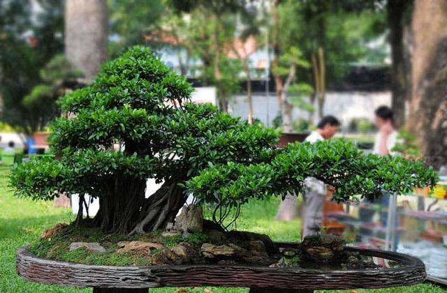 Comment cultiver et prendre soin du bonsaï