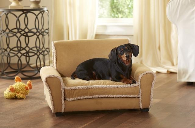 Le canapé pour les animaux domestiques