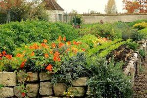 10 choses à savoir avant de cultiver un jardin potager biologique