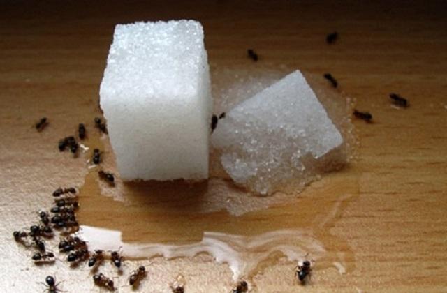 Tous les rem des efficaces contre les fourmis dans la maison for Astuces contre les fourmis dans la maison