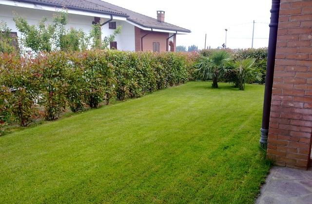 des conseils pour obtenir une pelouse parfaite page 3 sur 3. Black Bedroom Furniture Sets. Home Design Ideas