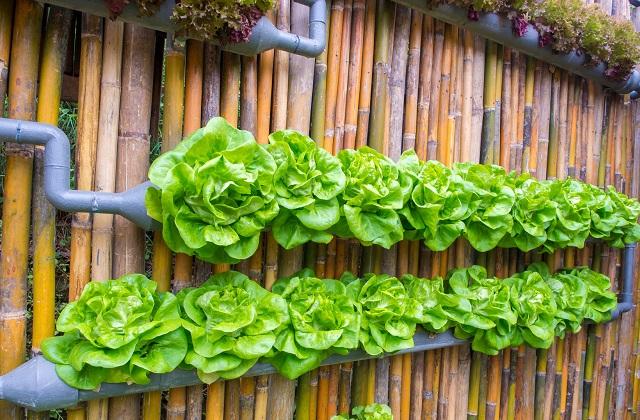 Le jardin potager à la maison dans un petit espace