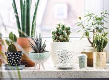 Les plantes pour décorer la salle de bains : voilà mes conseils