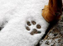 Comment protéger les pattes de notre chien du froid