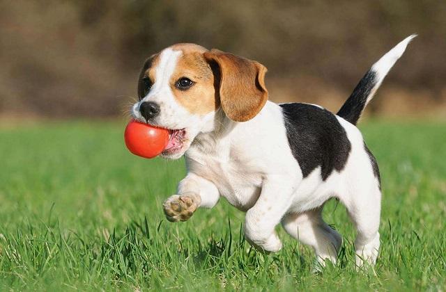 Comment rendre votre chien tranquille et heureux