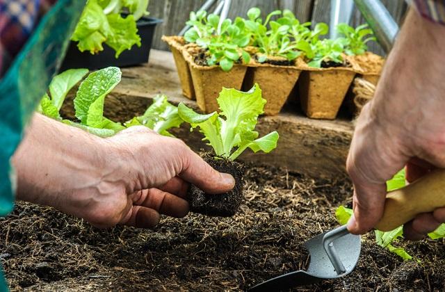 Jardin potager : que cultiver en mars ?