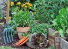 Le jardin potager en Avril : les produits à cueillir et à semer