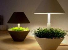 Une lampe LED pour les plantes aromatiques