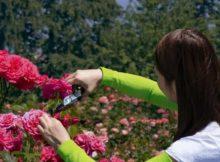 Jardinage : comment protéger vos bras