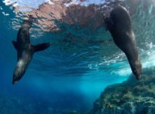 Lieux de rêve : les plus beaux parcs marins du monde