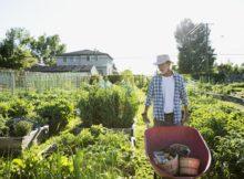 Le jardin potager ne va pas en vacances : les travaux en Août