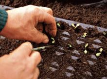 Le jardin potager en novembre : récoltes et semailles