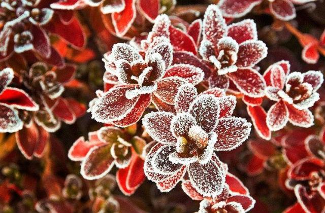 Comment prot ger les plantes du gel - Comment proteger les arbres fruitiers du gel ...