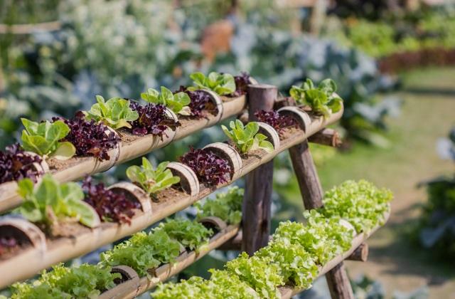 Le jardin potager en janvier des conseils utiles sur ce Jardinage en janvier