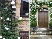 Comment décorer l'entrée de la maison avec des roses grimpantes
