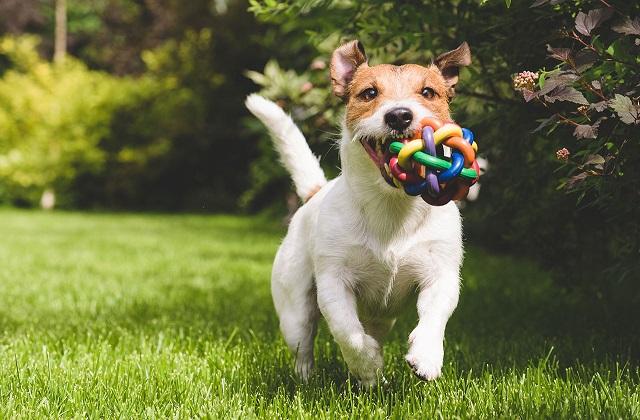 Créer un jardin pour le chien