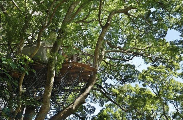 La cabane dans les arbres la plus grande au monde page 3 for La plus grande cabane du monde