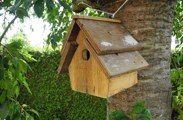 Comment construire des maisons pour les oiseaux