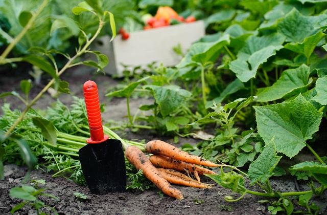 Le jardin potager en automne : que faut-il planter ?