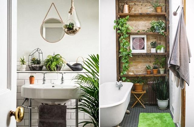 les plantes pour d corer la salle de bains voil mes conseils page 2 sur 3. Black Bedroom Furniture Sets. Home Design Ideas