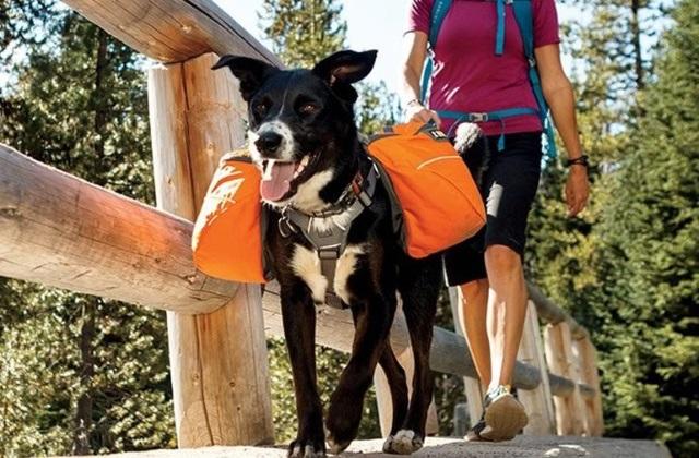 Ruffwear, sac de voyage pour chiens