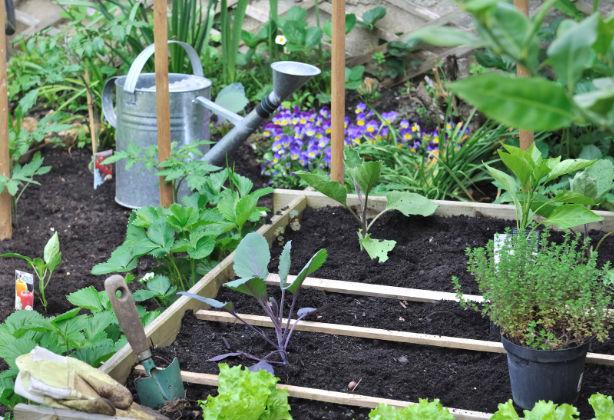 Le jardin potager en juin : voilà nos conseils