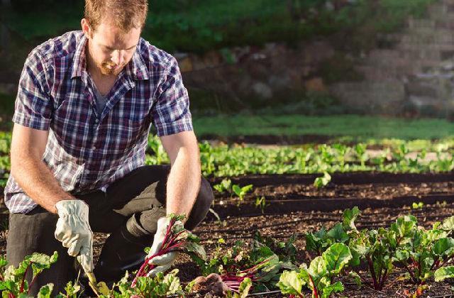 Travaille dans le jardin pour le mois de septembre