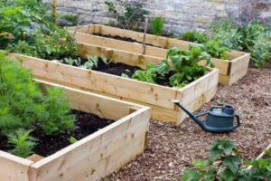 Le jardin potager en Octobre : voici les semailles et la récolte