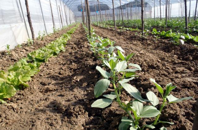 Le jardin potager en décembre : récoltes et semailles