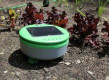 Tertill, le robot jardinier qui élimine toutes les mauvaises herbes