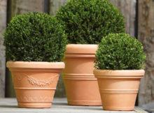 Comment choisir les pots pour les plantes
