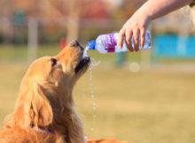 Même les animaux domestiques souffrent de la chaleur. Qu'est-ce qu'on peut faire ?