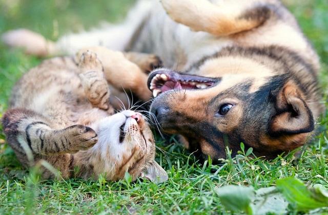 Cohabitation de chien et chat : voilà des règles et des conseils utiles