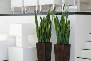 Des plantes d'intérieur qui n'ont pas besoin du soleil